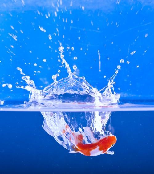20_Fish Splash
