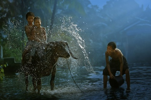 22_Buffalo Splash by Enjo Mathew