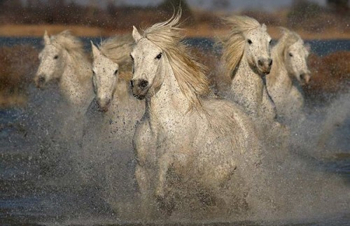 29_Galloping White Horses