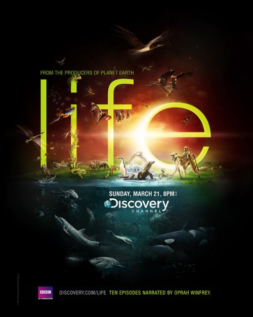 2_Discovery Channel - Life