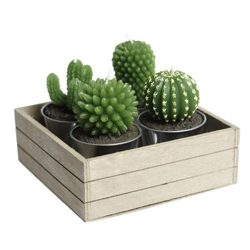 1_Cactus Candles