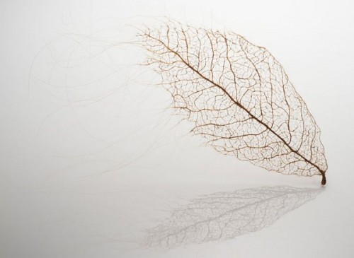 1_Human Hair Leaves