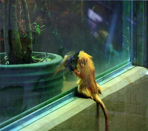 3_Small Monkey Panel