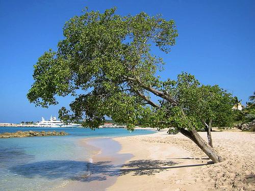 11_Beach Tree