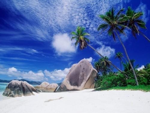 17_Palm Tree Beach Wallpaper