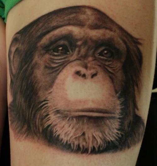 1_Chimp