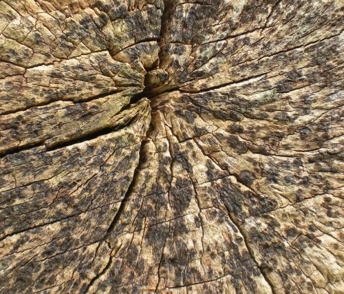 44_Stock Texture - Treestump Cross Section II