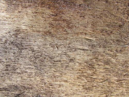 9_Wood Texture 01